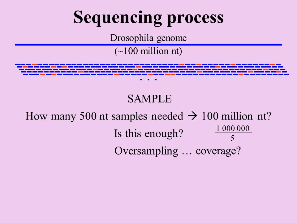 Sequencing process Drosophila genome (~100 million nt) SAMPLE...