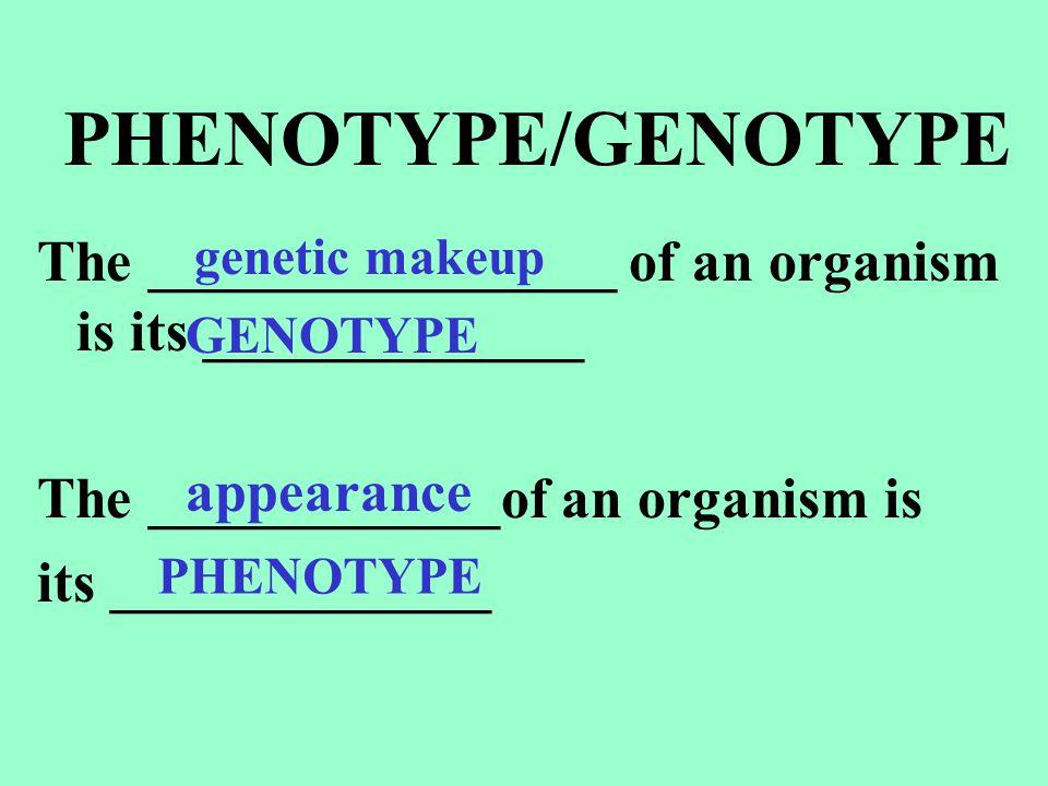 MAKING A CROSS for only a __________ trait = ____________________ A Punnett square for a MONOHYBRID CROSS looks like this: MONOHYBRID CROSS ONE GENE