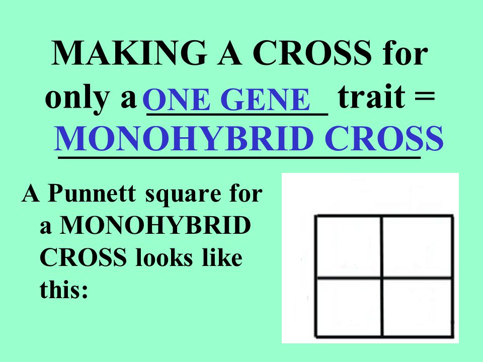 PUNNETT SQUARES are used to show possible offspring from a cross between 2 parents _______________ go at top and on left side Boxes show ____________ ___________________ T TtTt possible offspring combinations Parent alleles