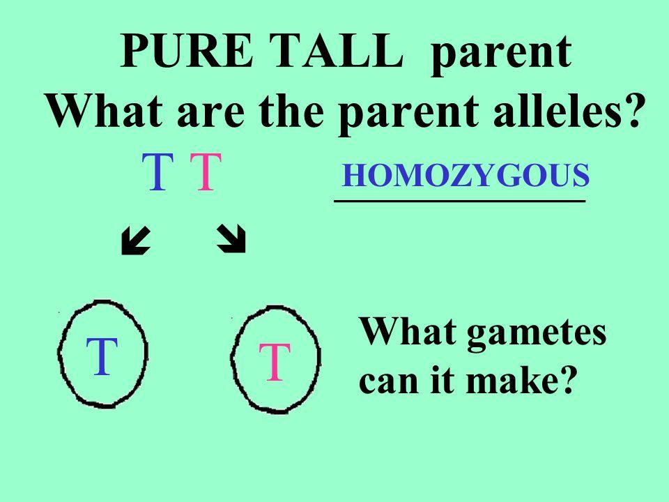 PURE SHORT parent What are the parent alleles.