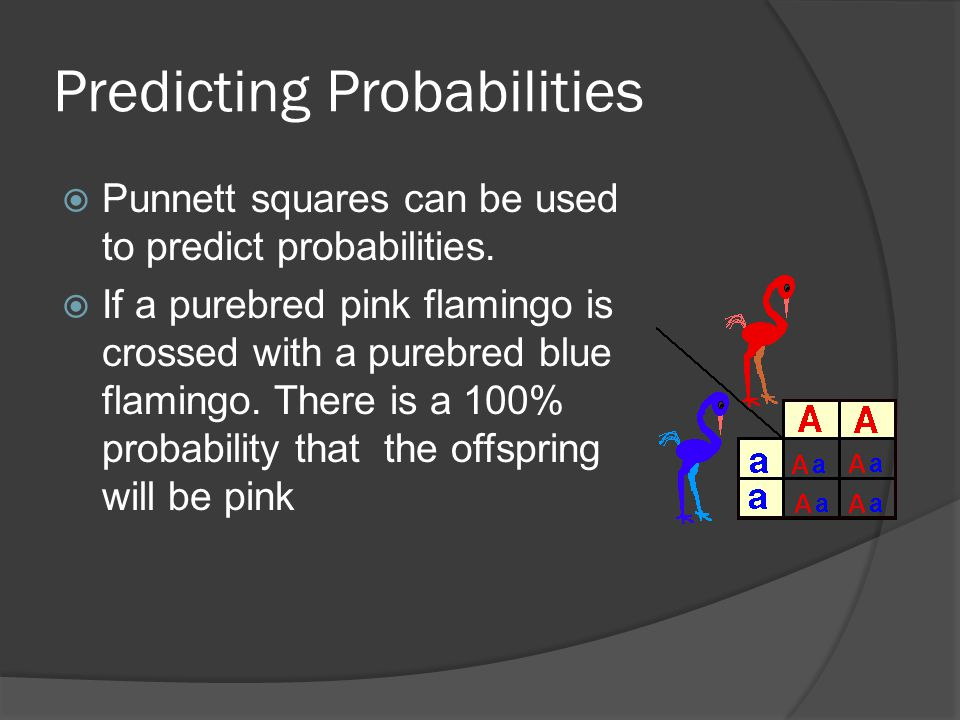 Predicting Probabilities  Punnett squares can be used to predict probabilities.