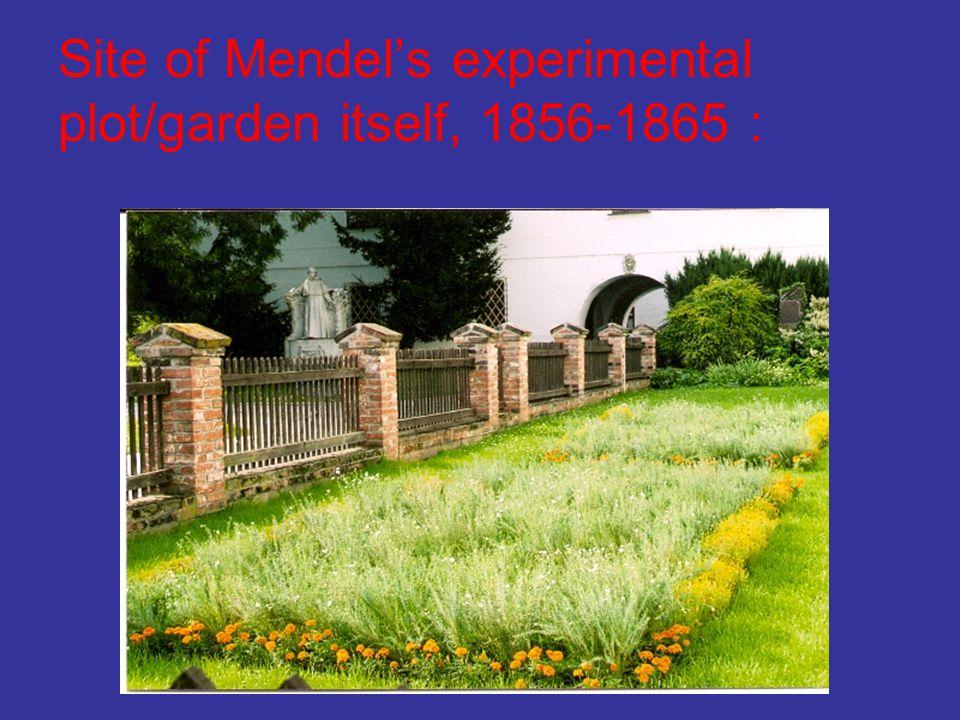 Site of Mendel's experimental plot/garden itself, 1856-1865 :