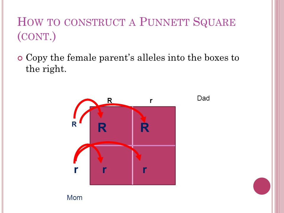 H OW TO CONSTRUCT A P UNNETT S QUARE ( CONT.) Copy the female parent's alleles into the boxes to the right.