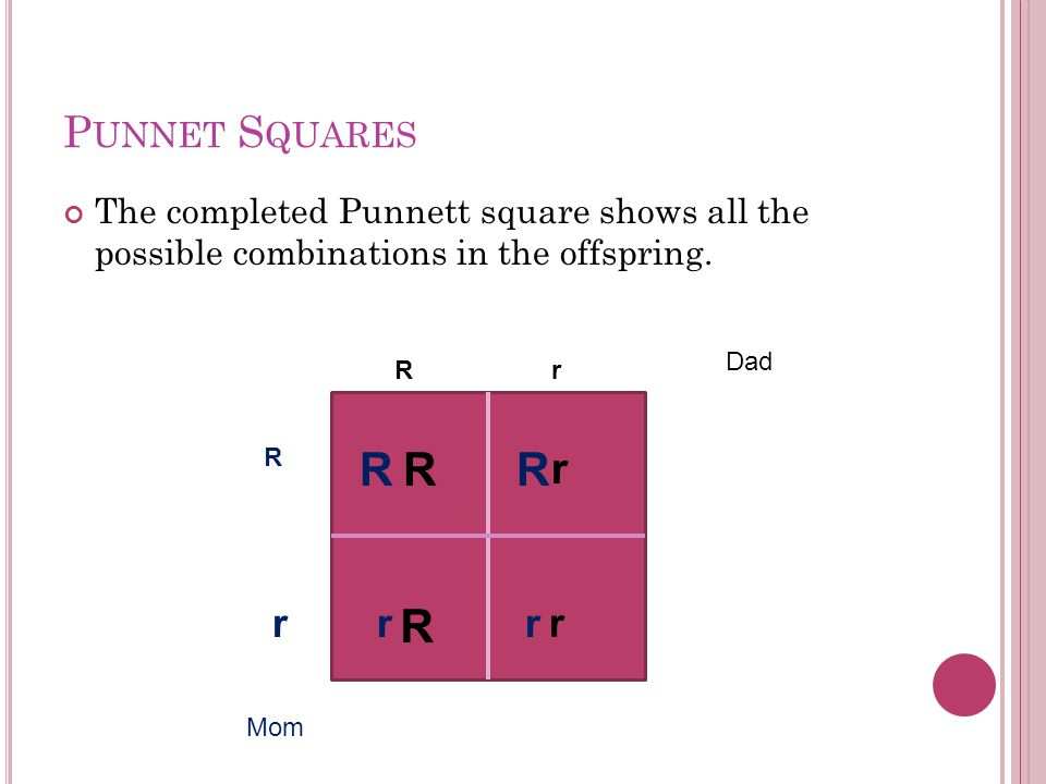 P UNNET S QUARES The completed Punnett square shows all the possible combinations in the offspring.