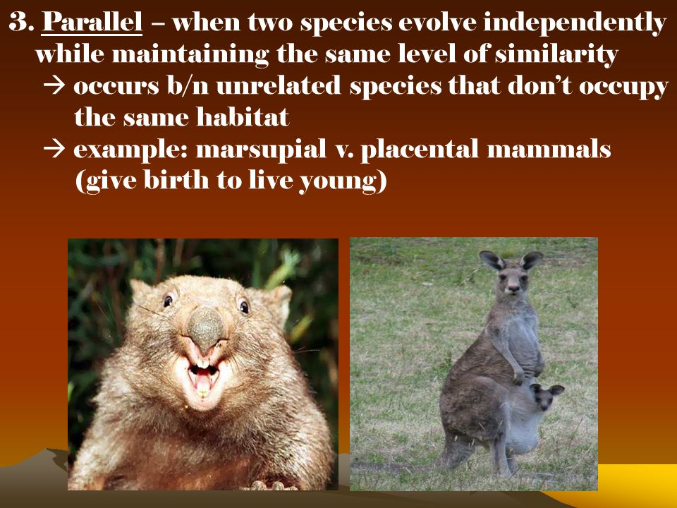 3. Parallel – when two species evolve independently while maintaining the same level of similarity  occurs b/n unrelated species that don't occupy th