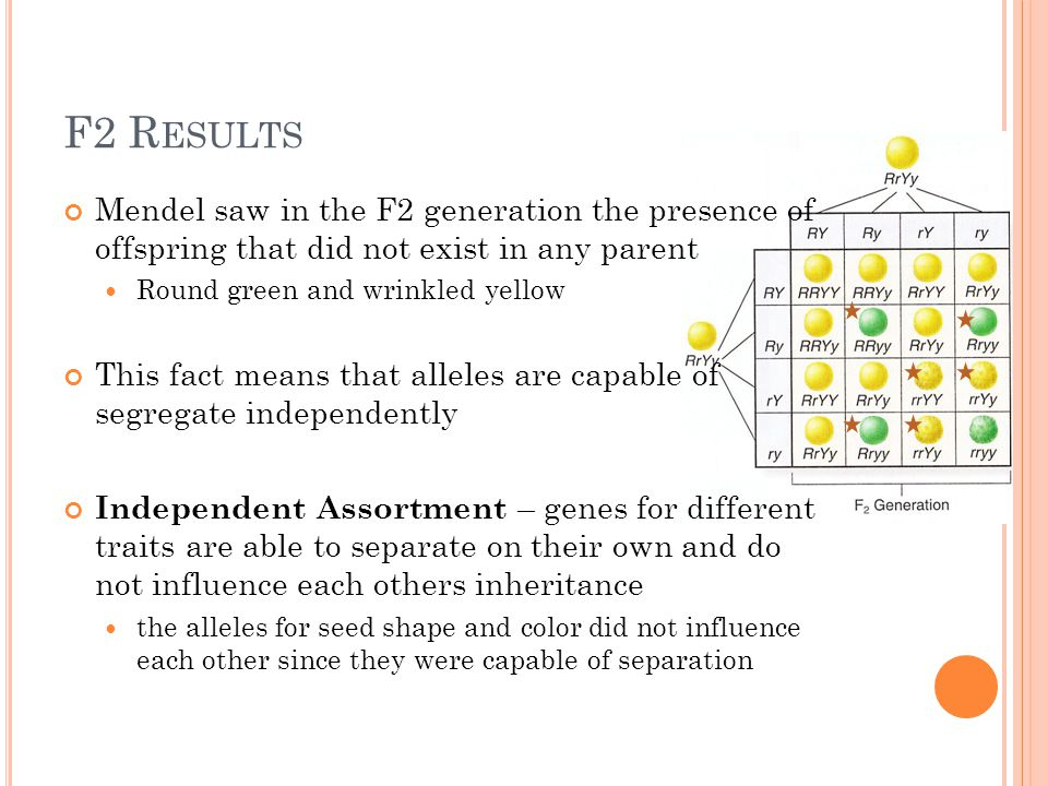 F2 R ESULTS Mendel saw in the F2 generation the presence of offspring that did not exist in any parent Round green and wrinkled yellow This fact means