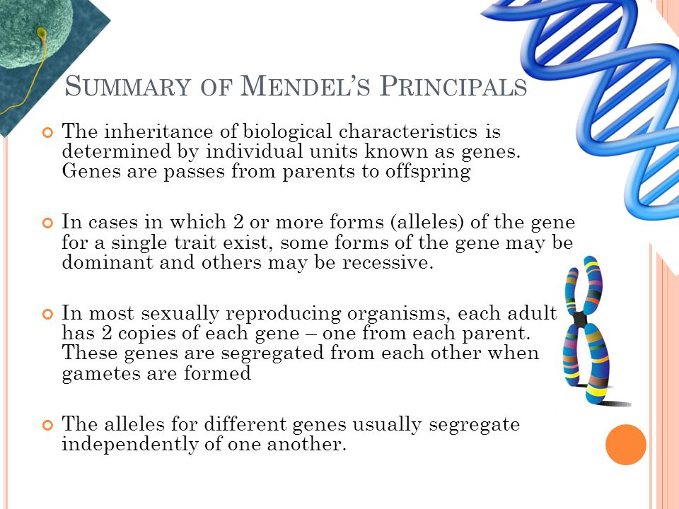 S UMMARY OF M ENDEL ' S P RINCIPALS The inheritance of biological characteristics is determined by individual units known as genes. Genes are passes f