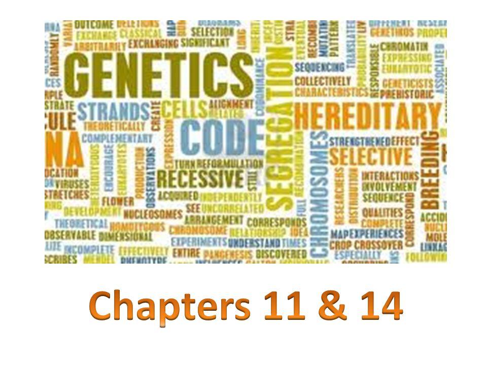 Know the definitions of the following vocabulary terms: Dominant Recessive Genotype Phenotype Heterozygous Homozygous Trait Homologous