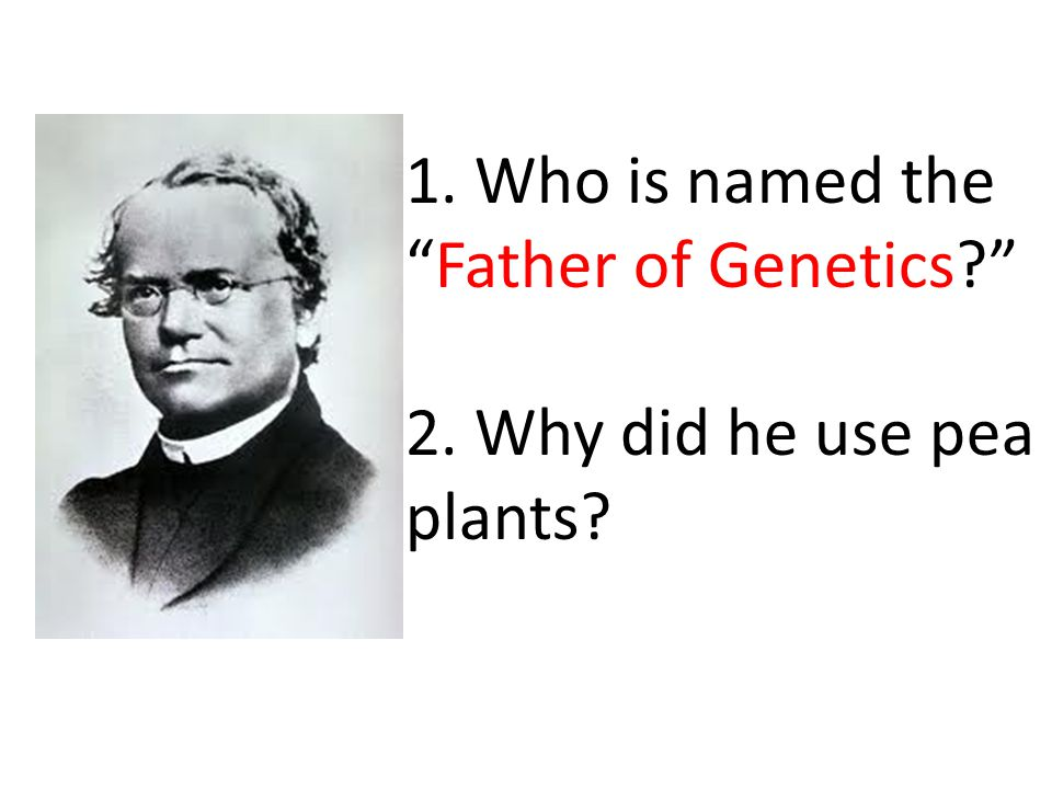 1. Gregor Mendel 2. To study the inheritance of traits and they reproduced quickly