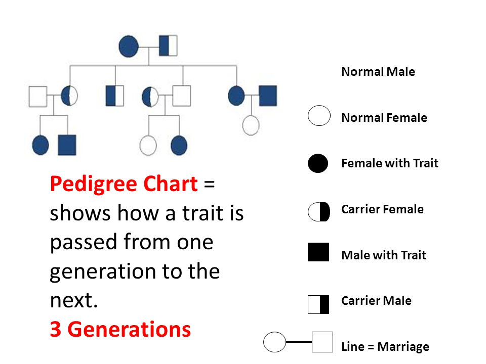 Pedigree Chart = shows how a trait is passed from one generation to the next. 3 Generations Normal Male Normal Female Female with Trait Carrier Female