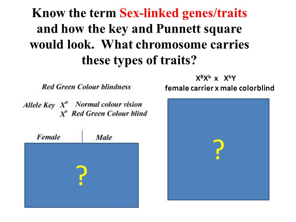 Know the term Sex-linked genes/traits and how the key and Punnett square would look. What chromosome carries these types of traits? XBXb XBXbXbXb YXBY