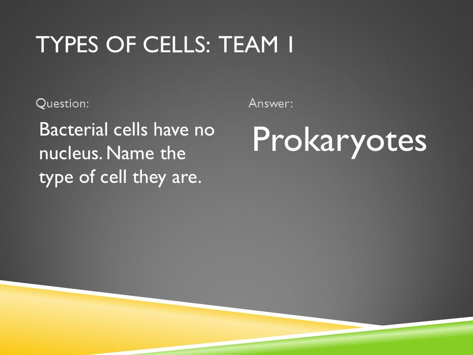 TYPES OF CELLS: TEAM 1 Question:Answer: Bacterial cells have no nucleus.