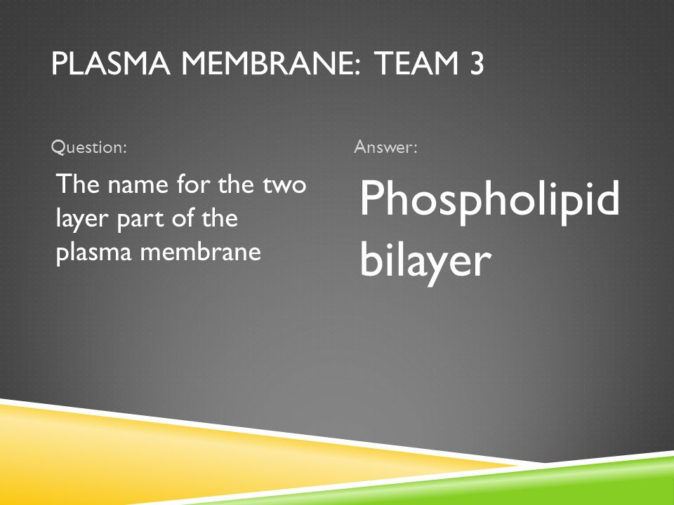 PLASMA MEMBRANE: TEAM 3 Question:Answer: The name for the two layer part of the plasma membrane Phospholipid bilayer