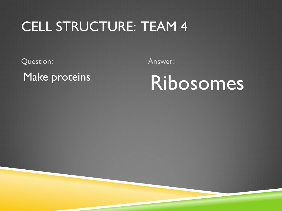 CELL STRUCTURE: TEAM 4 Question:Answer: Make proteins Ribosomes