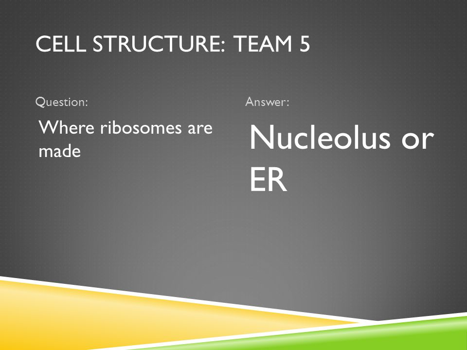 CELL STRUCTURE: TEAM 5 Question:Answer: Where ribosomes are made Nucleolus or ER