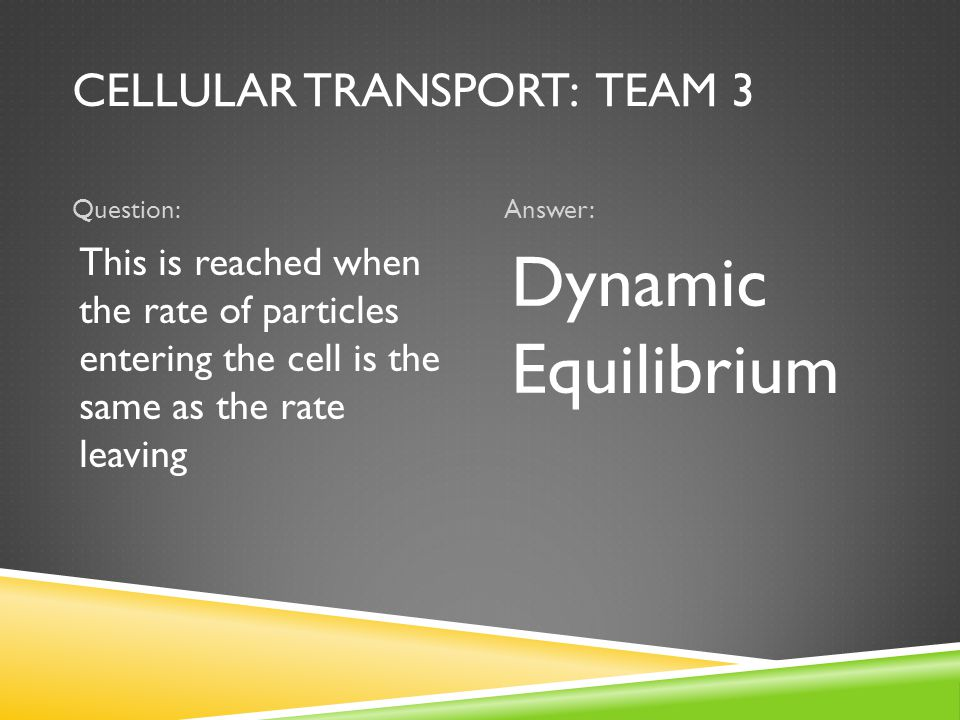 CELLULAR TRANSPORT: TEAM 3 Question:Answer: This is reached when the rate of particles entering the cell is the same as the rate leaving Dynamic Equilibrium