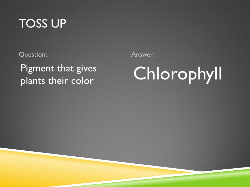 TOSS UP Question:Answer: Pigment that gives plants their color Chlorophyll