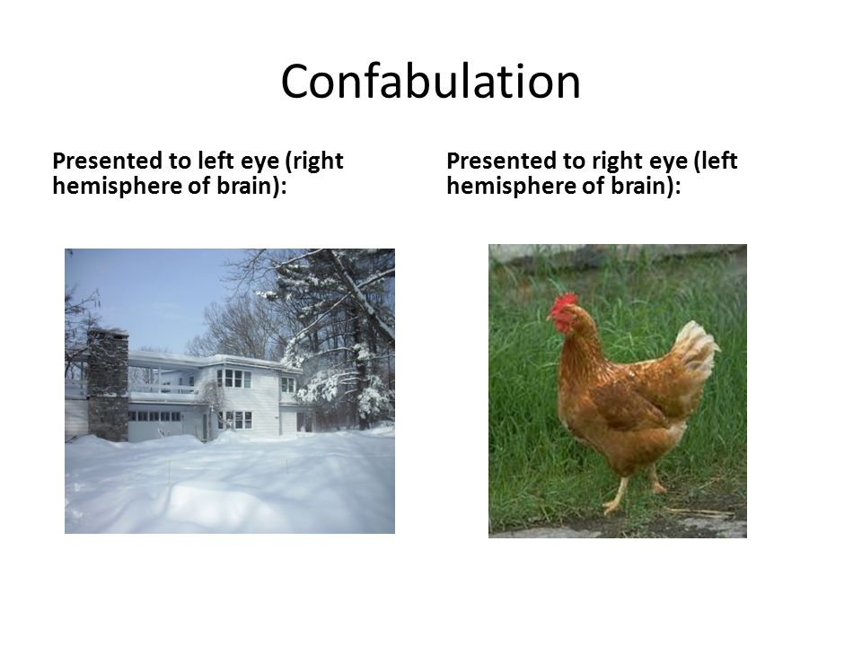 Confabulation Presented to left eye (right hemisphere of brain): Presented to right eye (left hemisphere of brain):