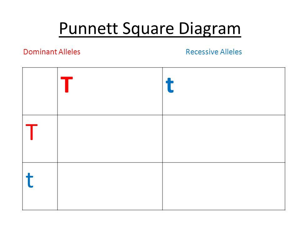 Punnett Square Diagram Tt T t Dominant AllelesRecessive Alleles