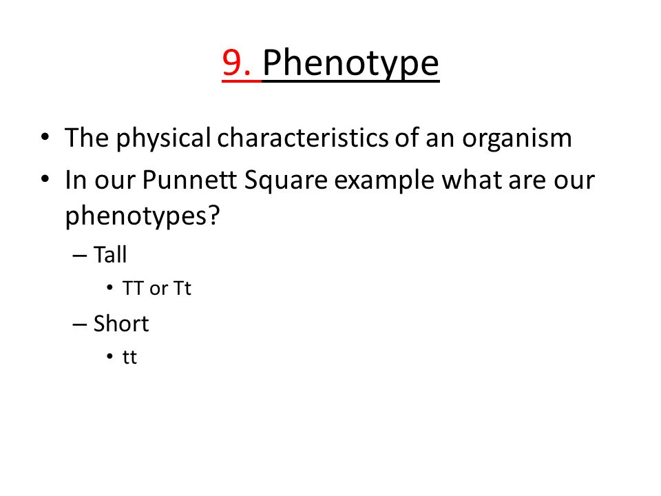 9. Phenotype The physical characteristics of an organism In our Punnett Square example what are our phenotypes? – Tall TT or Tt – Short tt