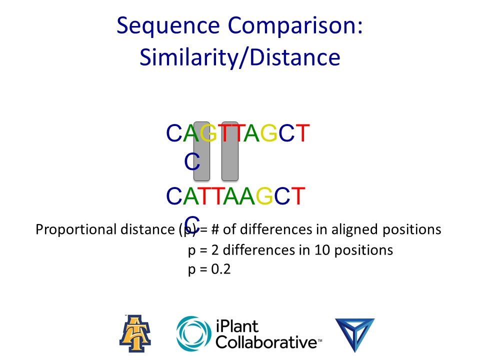 Sequence Comparison: Similarity/Distance CAGTTAGCT C CATTAAGCT C Proportional distance (p) = # of differences in aligned positions p = 2 differences in 10 positions p = 0.2