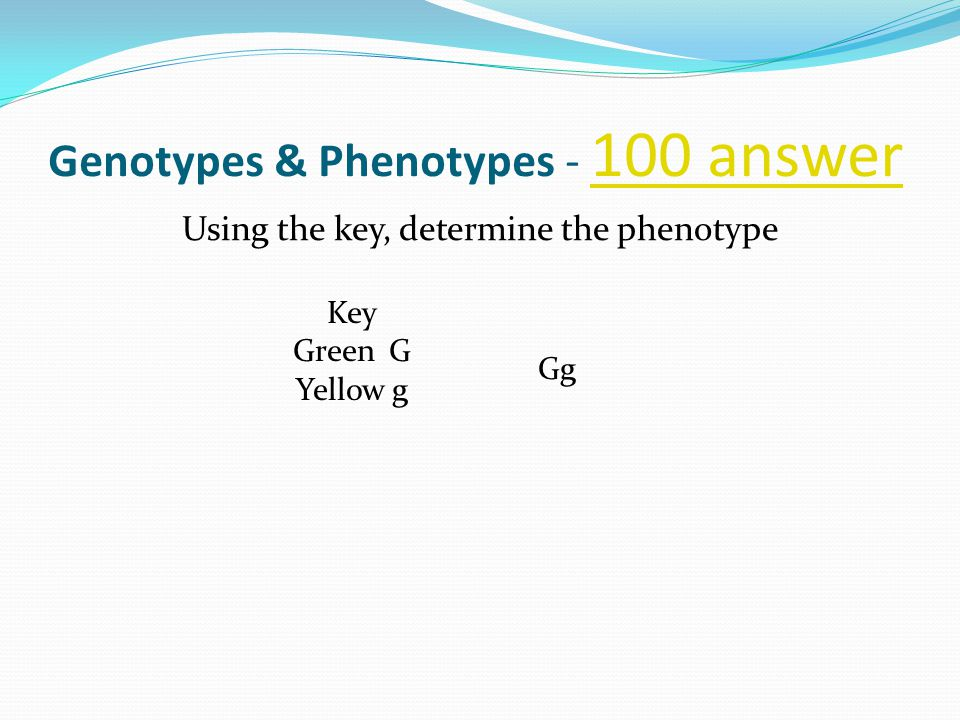 Genotypes & Phenotypes - 100 answer 100 answer Using the key, determine the phenotype Key GreenG Yellowg Gg