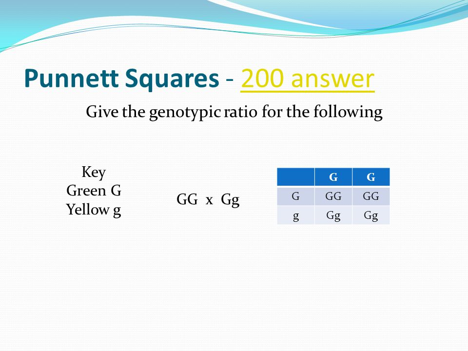 Punnett Squares - 200 answer200 answer Give the genotypic ratio for the following GG x Gg Key Green G Yellowg GG GGG gGg
