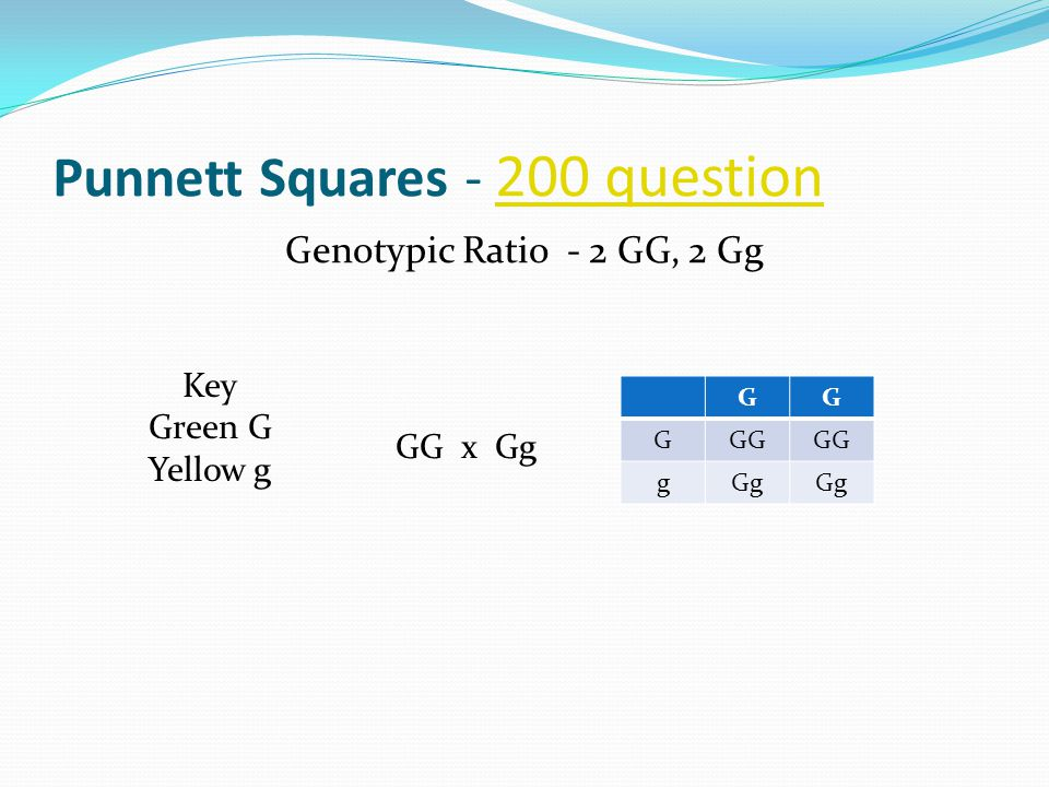 Punnett Squares - 200 question 200 question Genotypic Ratio - 2 GG, 2 Gg GG x Gg Key Green G Yellowg GG GGG gGg
