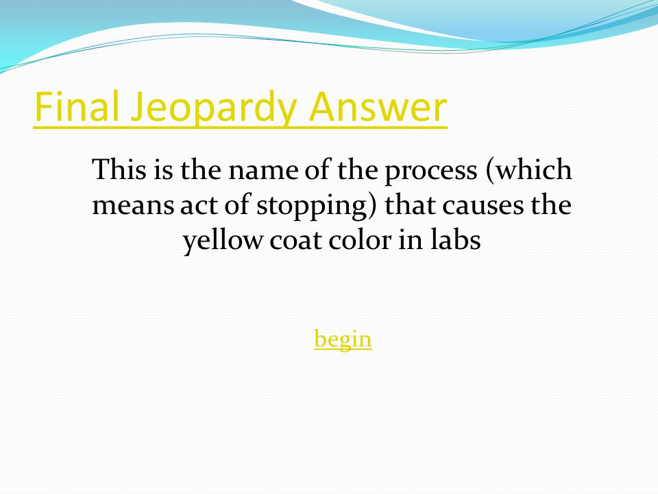 Final Jeopardy Answer begin This is the name of the process (which means act of stopping) that causes the yellow coat color in labs