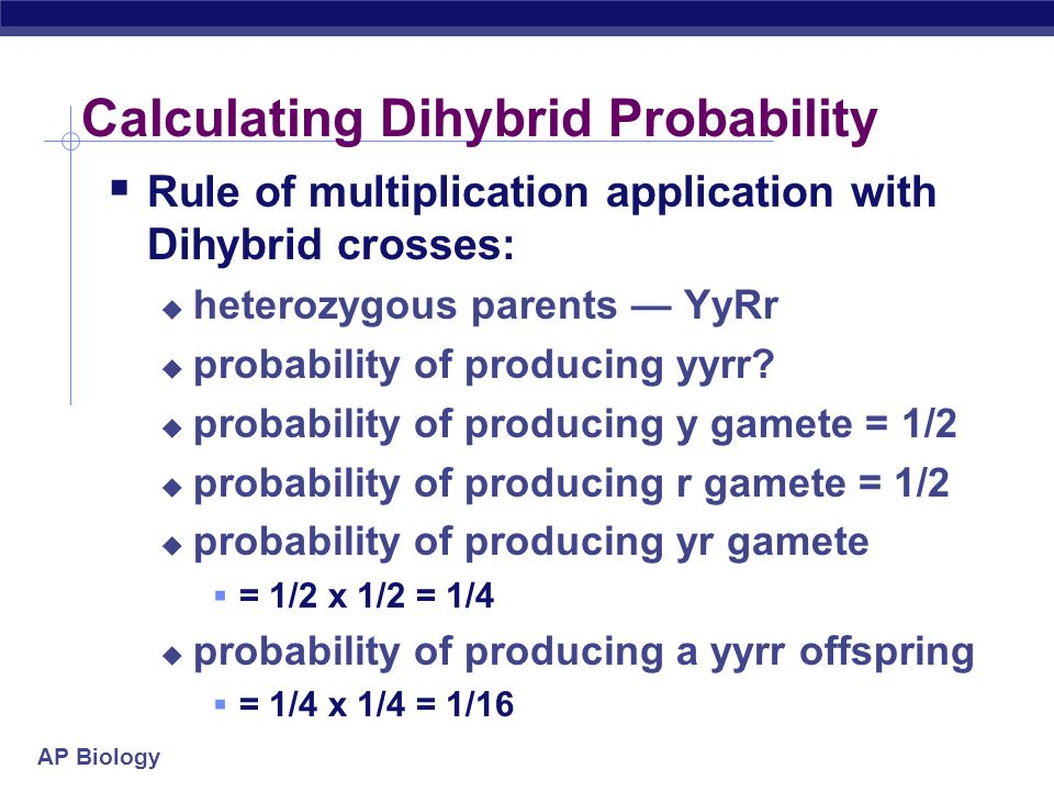 AP Biology Calculating Dihybrid Probability  Rule of multiplication application with Dihybrid crosses:  heterozygous parents — YyRr  probability of