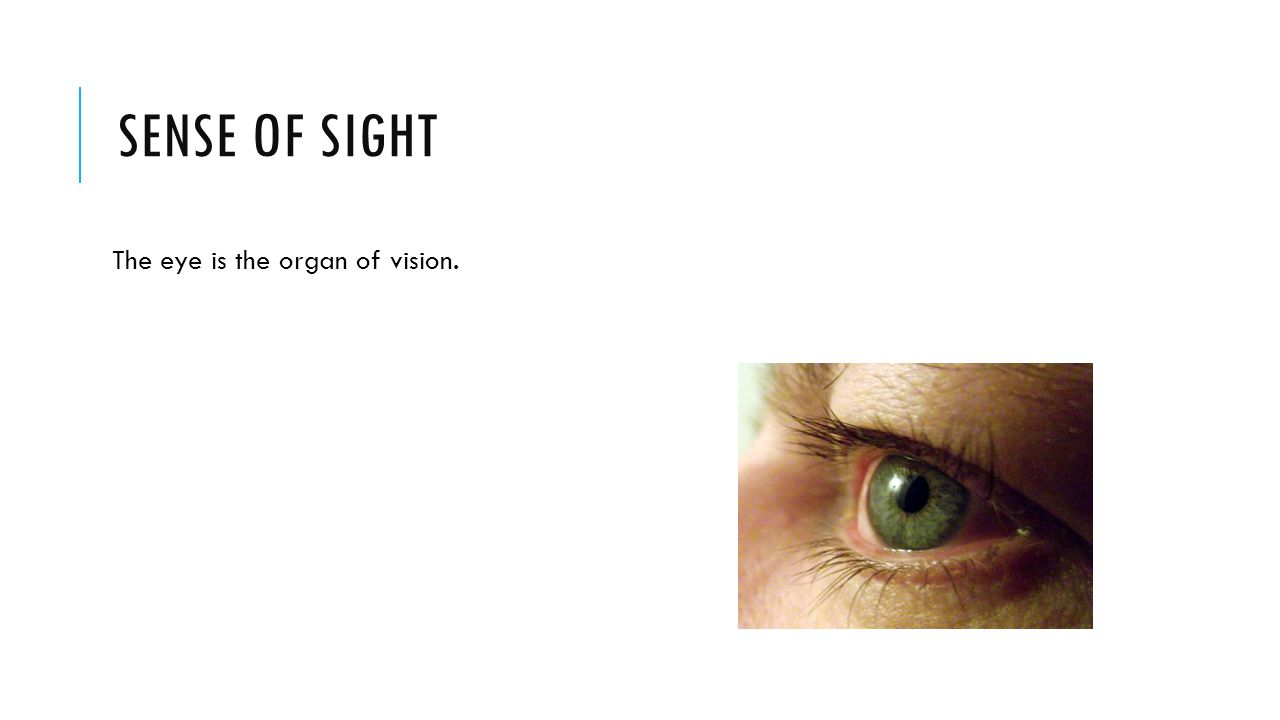 SENSE OF SIGHT The eye is the organ of vision.