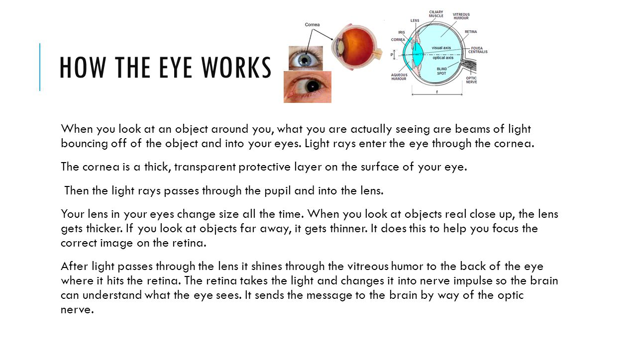 HOW THE EYE WORKS When you look at an object around you, what you are actually seeing are beams of light bouncing off of the object and into your eyes.