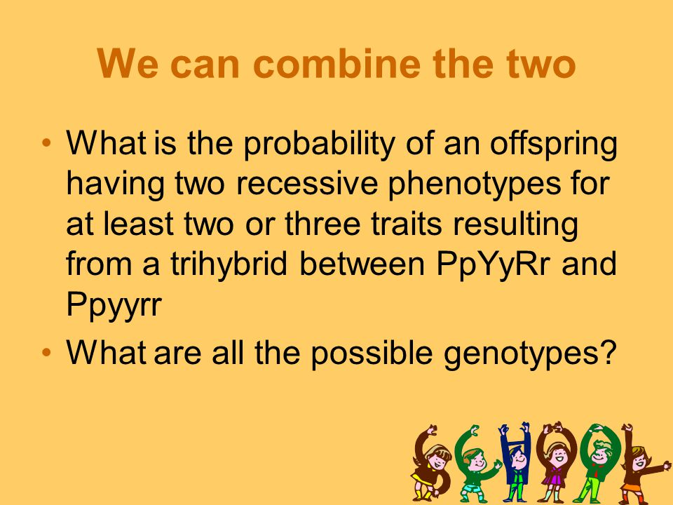 We can combine the two What is the probability of an offspring having two recessive phenotypes for at least two or three traits resulting from a trihybrid between PpYyRr and Ppyyrr What are all the possible genotypes