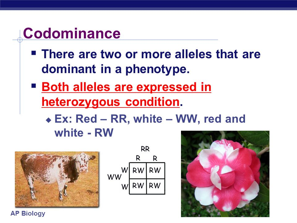 AP Biology Incomplete dominance true-breeding red flowers true-breeding white flowers X P 100% 100% pink flowers F 1 generation (hybrids) self-pollinate 25% white F 2 generation 25% red 1:2:1 50% pink