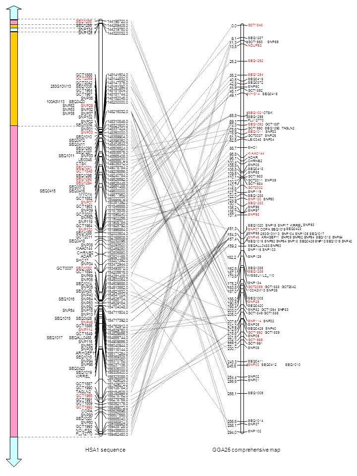 HSA1 sequence SEQ0415 SEQ1285 144198720,0 SEQ1286 144289408,0 SNP134144319760,0 SNP125 144320032,0 GCT1888 148141504,0 GCT2069 148144832,0 GCT2042148147376,0 253G10M13SEQ1008 148151392,0 GCT1964 148151504,0 GCT1967148151744,0 SNP36 148152048,0 100A3M13SEQ0420 148200000,0 SNP29SNP82 SNP83SNP32 SNP35SNP37 SNP102 148216032,0 SNP02148310848,0 SEQ1009 148321600,0 SNP01 148337424,0 SNP03 148350000,0 SEQ1010148389904,0 SEQ0412 148398352,0 SEQ0411 148404544,0 SEQ1293148505824,0 SEQ1287 148506576,0 SEQ1011SNP33 148565408,0 LEI0348 148656672,0 CTSK149035312,0 SEQ1021 149078784,0 GCT1848 149205856,0 SEQ1295149240784,0 SEQ1292 149526592,0 SEQ1294 149528448,0 SEQ0372149581488,0 SEQ0416 149800000,0 MYO14 149877952,0 GCT1852 150222272,0 SNP07150351392,0 GCT1983 151846688,0 SNP39 151875536,0 GCT2002151898240,0 SNP50 151902256,0 SNP119 151906784,0 GCT1984 151925792,0 SNP120151996864,0 SEQ1288 152003504,0 GCT2011 152168608,0 SEQ0418152232096,0 SNP08 152293520,0 KIAA0144 152459280,0 CHRNB2152806880,0 ADAR 152821168,0 SHC17 153201392,0 SNP34 153472944,0 SEQ1062GCT0037153493872,0 GCT1894 154205616,0 SNP69 154251408,0 SNP06154500064,0 SEQ1014 154509888,0 SNP05 154513552,0 SEQ0425 154521632,0 SNP40154547024,0 SEQ1016SNP64 154626704,0 SNP63 154629184,0 SNP92154704048,0 SNP54SNP18 SNP13 154711504,0 SEQ1015SEQ0426 SNP46 154717392,0 GCT1886 154762912,0 SNP114 154829760,0 GCT1849154829856,0 SEQ1017SEQALL0488 154855744,0 SNP116 154909856,0 SNP62155040944,0 SNP09 155118144,0 ARHGEF11 155171264,0 SEQ1018 155369328,0 SNP94155370752,0 SNP95 156237136,0 SEQ0423 156306000,0 SEQ1019156306400,0 KIRREL 156323088,0 157429024,0 GCT1887 157429072,0 GCT1990158108784,0 TAGLN2 158154528,0 GCT1965 158278752,0 GCT1991158278768,0 GCT1889 158352176,0 GCT1992 158459072,0 COPA158525696,0 SNP93 158607568,0 SEQ1020 158665040,0 SNP60 159358624,0 GCT1993159435728,0 NDUFS2 159438800,0 FLJ12770 159462480,0 GGA25 comprehensive map GCT1848 0,0 SEQ1287 9,1 GCT1993SNP69 11,3 NDUFS2 13,8 SEQ1292 26,2 SEQ1294 36,2 SEQ0415 40,5