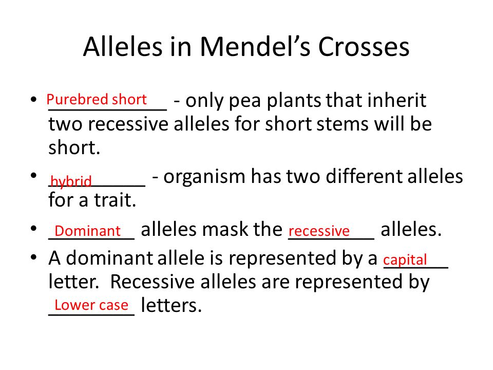 Alleles in Mendel's Crosses ___________ - only pea plants that inherit two recessive alleles for short stems will be short. _________ - organism has t