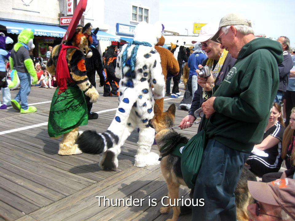 Thunder is Curious