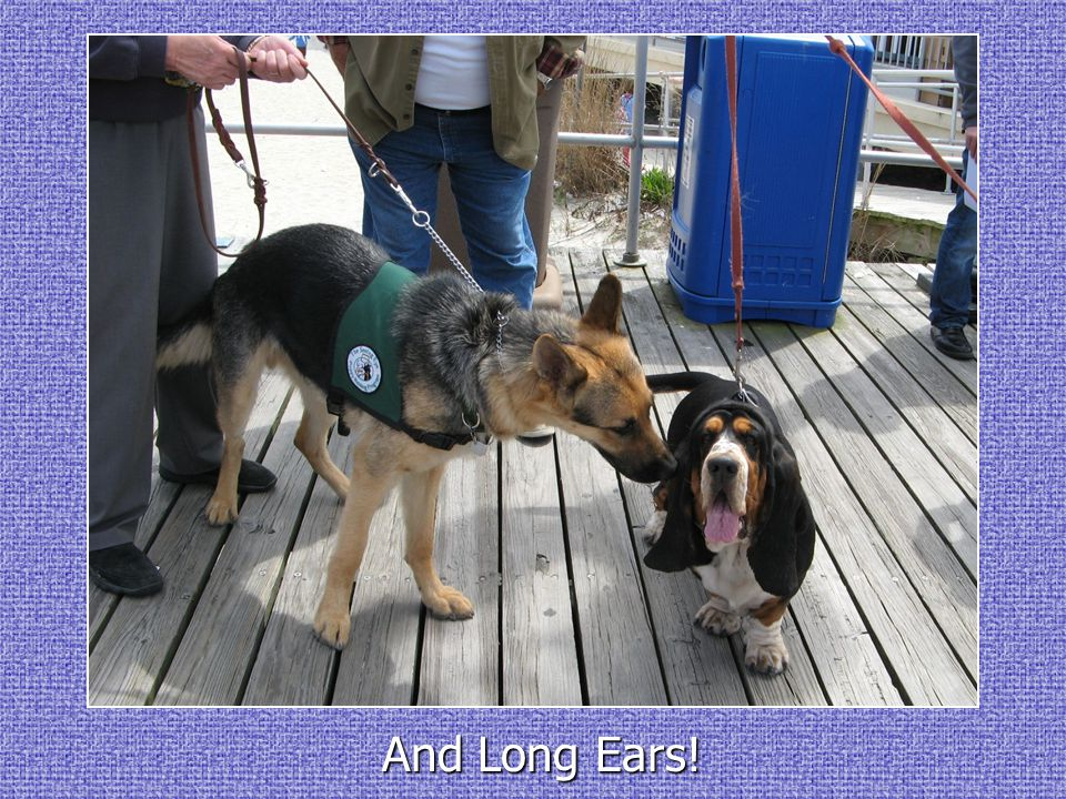 And Long Ears!
