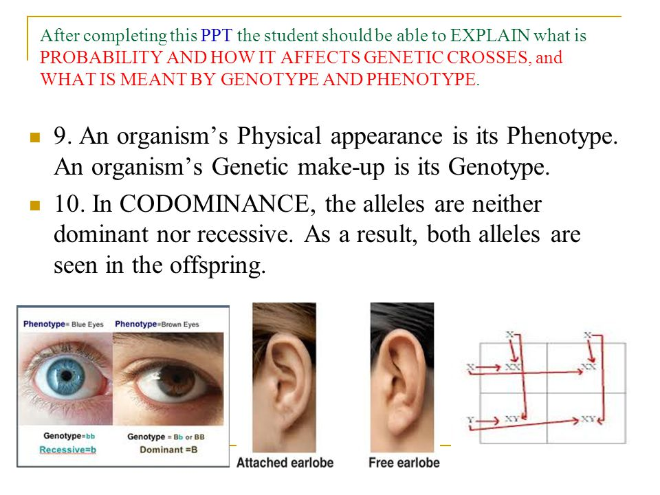After completing this PPT the student should be able to EXPLAIN what is PROBABILITY AND HOW IT AFFECTS GENETIC CROSSES, and WHAT IS MEANT BY GENOTYPE AND PHENOTYPE.