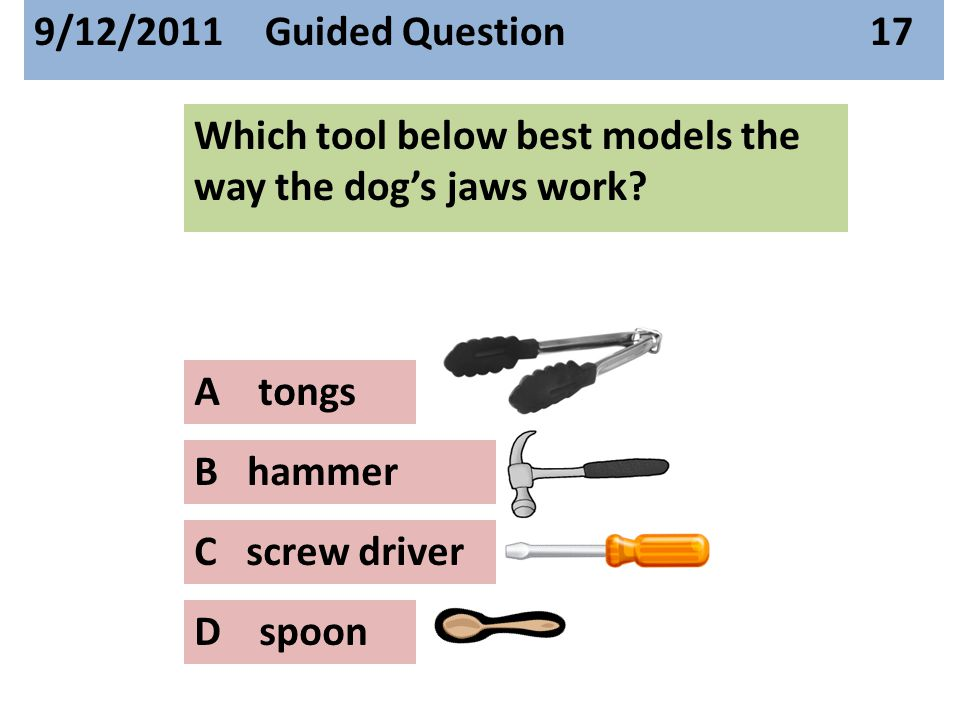 Which tool below best models the way the dog's jaws work.