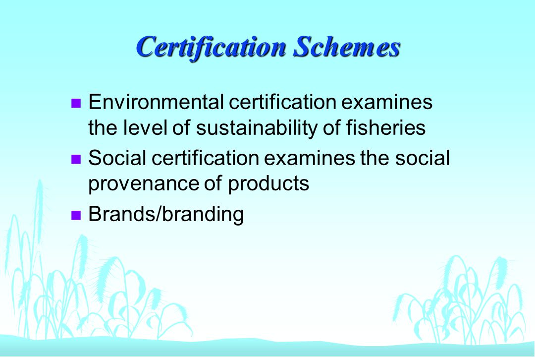 Certification Schemes n Environmental certification examines the level of sustainability of fisheries n Social certification examines the social prove