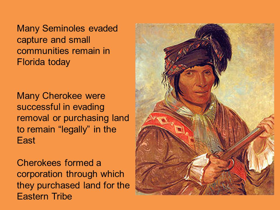 Many Seminoles evaded capture and small communities remain in Florida today Many Cherokee were successful in evading removal or purchasing land to rem