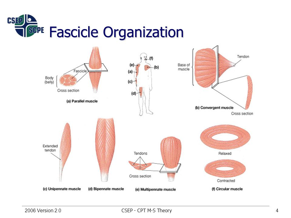 CSEP - CPT M-S Theory2006 Version 2.04 Fascicle Organization