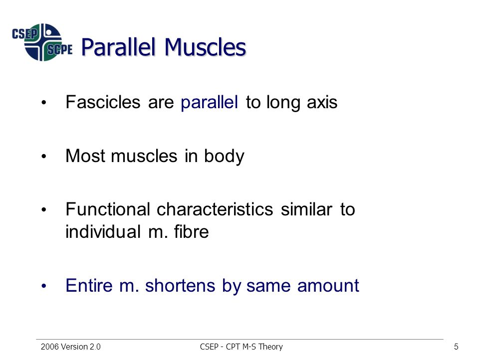 CSEP - CPT M-S Theory2006 Version 2.05 Parallel Muscles Fascicles are parallel to long axis Most muscles in body Functional characteristics similar to individual m.