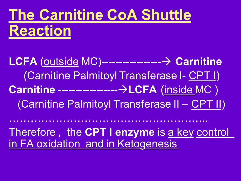 The Carnitine CoA Shuttle Reaction LCFA (outside MC)-----------------  Carnitine (Carnitine Palmitoyl Transferase I- CPT I) Carnitine -----------------  LCFA (inside MC ) (Carnitine Palmitoyl Transferase II – CPT II) ………………………………………………..