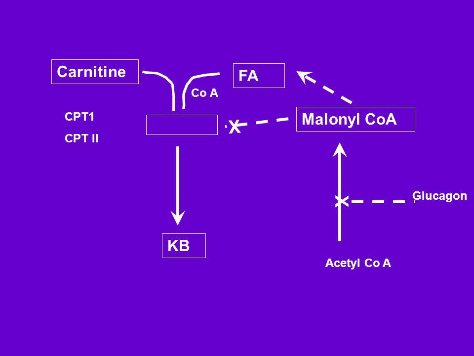 Carnitine FA Malonyl CoA KB X Acetyl Co A Glucagon CPT1 CPT II X Co A