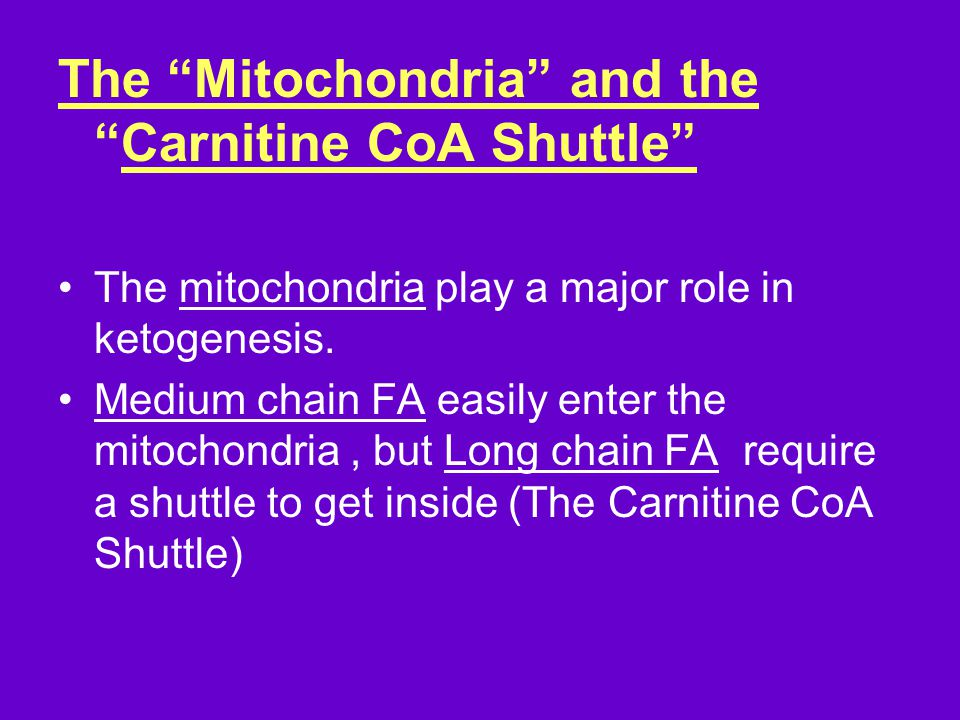 The Mitochondria and the Carnitine CoA Shuttle The mitochondria play a major role in ketogenesis.
