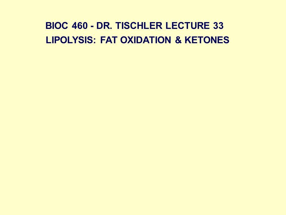 LIPOLYSIS: FAT OXIDATION & KETONES BIOC 460 - DR. TISCHLER LECTURE 33
