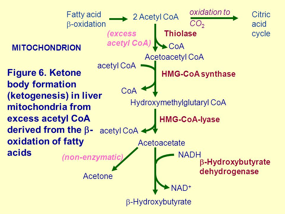 Figure 6. Ketone body formation (ketogenesis) in liver mitochondria from excess acetyl CoA derived from the  - oxidation of fatty acids MITOCHONDRION