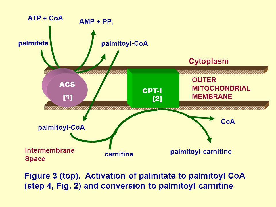 Figure 3 (top). Activation of palmitate to palmitoyl CoA (step 4, Fig.